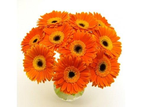 Букет из оранжевых гербер