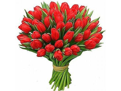 Букет красных тюльпанов в бутонах №299