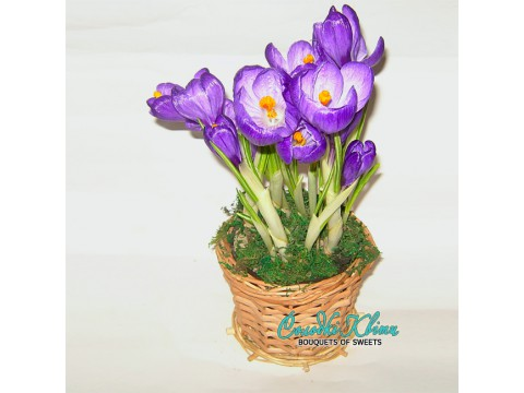 Crocuses in a basket from a rod №500