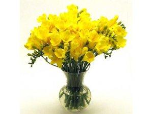 Букет из желтых фрезий
