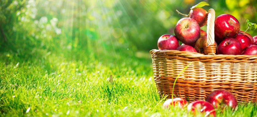 Доставка фруктовых корзин  Только свежие фрукты для вашего здоровья и хорошего настроения